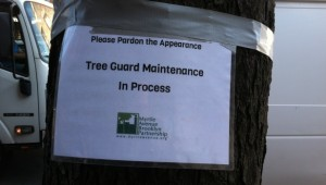 Tree Guard Maintenance