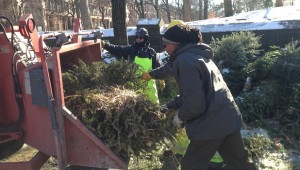 MulchFest Fort Greene Park 2015