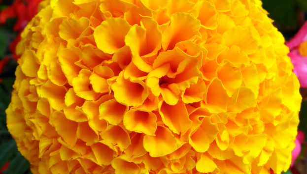 marigold_mom's day
