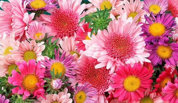 flowers_Bella Rosa_sized for blog